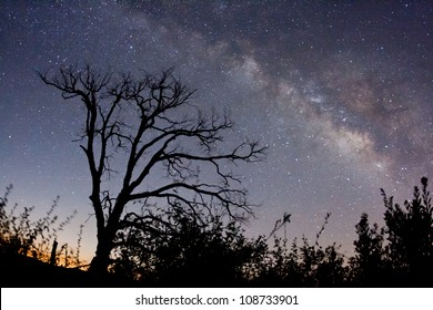 The Milky Way and fire-damaged trees. Paso Picacho Campground at Cuyamaca Rancho State Park in San Diego County, California USA