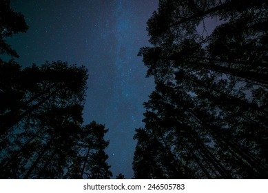 Milky way in forest landscape