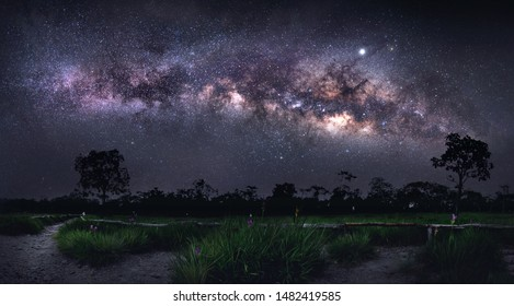 Milky way galaxy on hill under amazing starry blue night sky. Silhouette of lonely hight tree & Krachiew flower field or siam tulips blooming in jungle at Sai Thong National Park, Chaiyaphum, Thailand