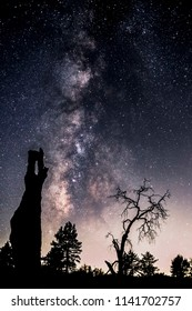 Milky Way galaxy over some dead trees in Mount Laguna, California