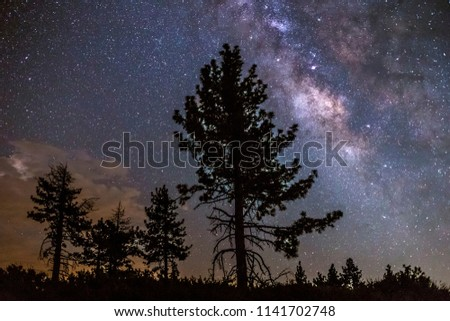 Milky Way galaxy over some pine trees in Mount Laguna, California