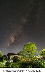 Milky way galaxy and silhouette of tree with stars and space dust in the universe