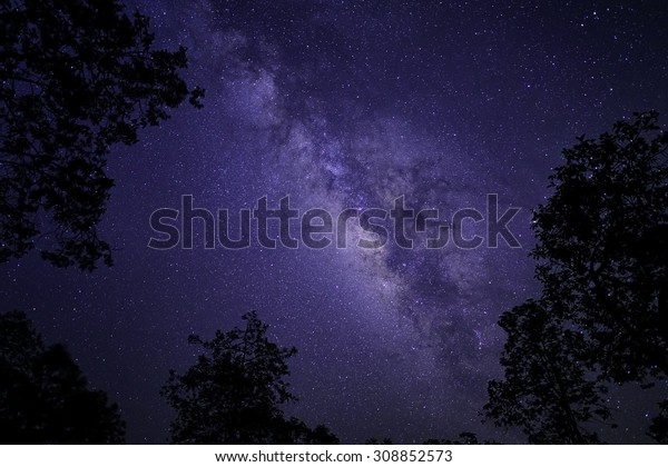 milky way galaxy and sillhuette tree
