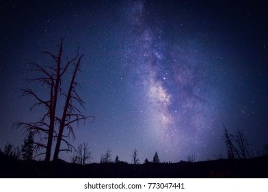 The Milky Way glows in the night sky behind a silhouette of trees and hills.