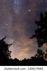 Milky way on the sky over the trees