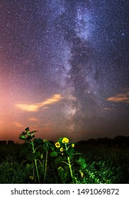 Milky Way and one sunflower in the field at night. Photo of the starry night sky