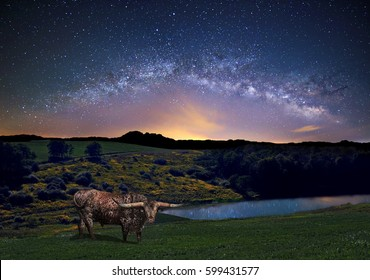 The Milky Way over beautiful farmland with a Texas Longhorn bull in the foreground.