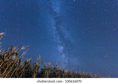 The Milky Way over a corn field