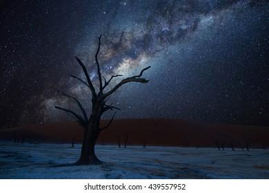 Milky way over dead tree