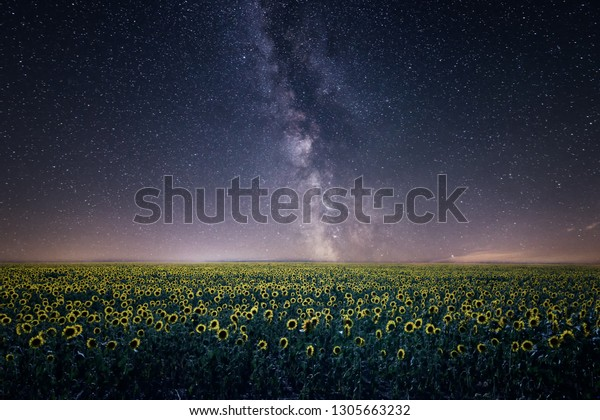 Milky way over a field of sunflowers at night