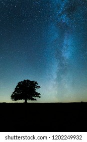 Milky way over the old oak