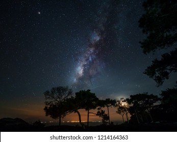 Milky Way over pine trees after sunset, Phu Kradueng National Park, Loei , Thailand