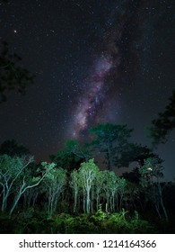 Milky Way over pine trees , Phu Kradueng National Park, Loei , Thailand