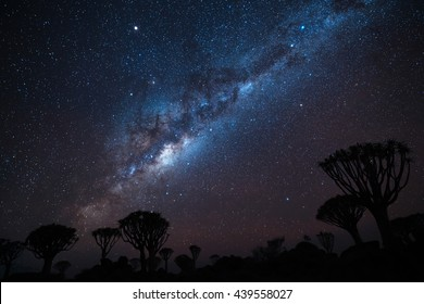 Milky way over Quiver trees forest