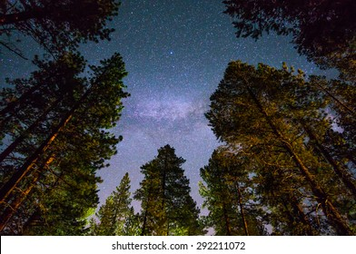Milky way over redwood trees, near south Lake Tahoe, California.