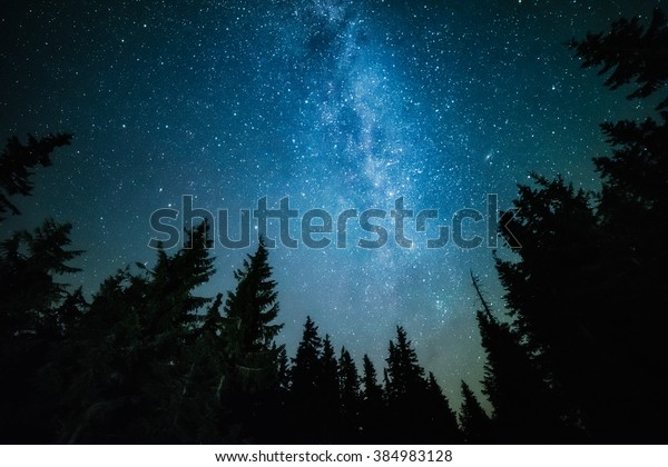 The Milky Way rises over the pine trees on a foreground