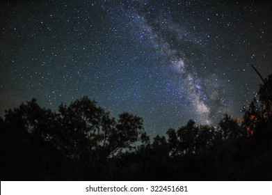 Milky way shown above and behind tree silhouettes