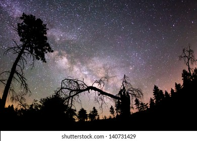 The Milky Way and some trees. In the mountains of San Diego County.