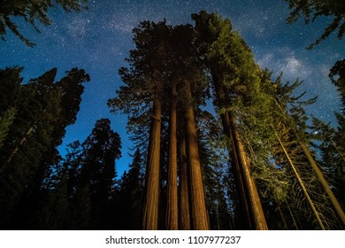 The milky way stretching across the sky over massive sequoia trees in National Park.