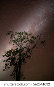 Milky way with tree foreground on clear sky