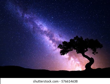 Milky Way and tree on the hill. Old tree growing out of the mountain against night starry sky with purple milky way. Night landscape. Space background. Galaxy. Travel.. Wilderness, wild nature