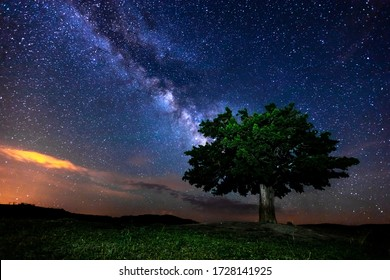 Milky Way and tree on the mountain. Old tree growing out against night starry sky with purple milky way. Night landscape. Space background. Galaxy. Mountain ridge. Wilderness, wild nature.