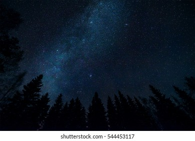 Milky way and trees in night landscape