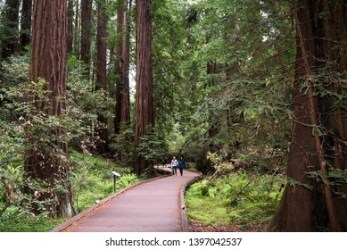 Mill Valley, California/USA- May 2019: Muir Woods National Monument is the closest place to San Francisco where visitors can see coastal redwood trees, a few miles north of the Golden Gate Bridge.