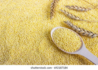 millet grain with wheat. Millet seeds in a wooden spoon on spoon background