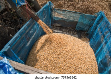 The milling of corn by farmers in the North of Thailand, Corn mill