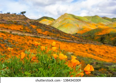 Millions of California Poppies in Walker Canyon / Lake Elsinore, California