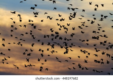 Millions of starlings flying in a bright sky background