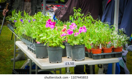 Milton Abbas / UK - July 29 2017: Flowers on the table for sale during street fair in Milton Abbas village, Dorset, UK, medieval market in England.