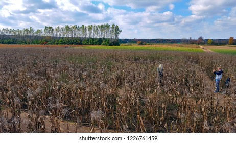 MILTON, CANADA - OCTOBER 14, 2018: People in a corn field in Milton, Canada.