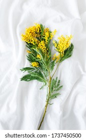 Mimosa branch on a white background.  Flowers lie at home on sheets. Flower gift. Yellow mimosa flowers - Shutterstock ID 1737450500