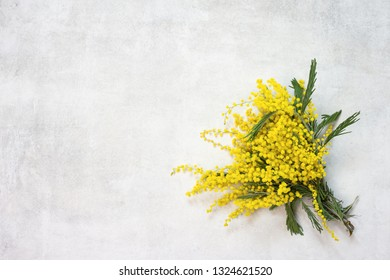 Mimosa flowers bunch isolated on white background top view