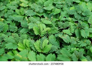 Similar Images, Stock Photos & Vectors of Green Vector