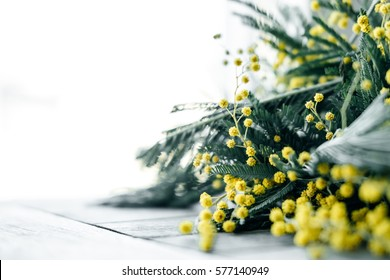 Mimosa spring flowers on the wooden table.  Springtime. Toned photo