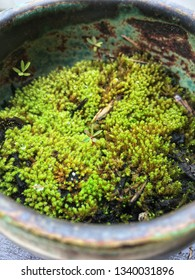 Minature biome of green moss and lichen in a handmade burnt turquoise ceramic bowl.