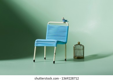 minature with blue budgie budgeriga sitting on backrest of vintage blue and white fifties garden chair, golden bird cage next to it, green backround.  Concept of captivity.