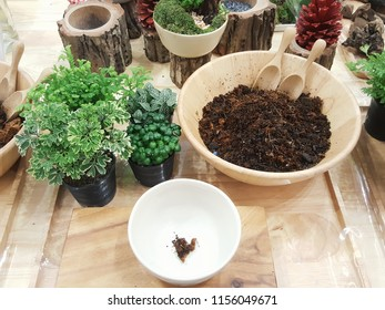 Minature garden workshop with materials including various small trees, soils in bowl, and ceramic bowl