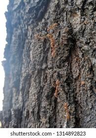 Minature world ANTS