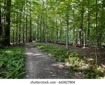 Mine Run Trail, Great Falls Park in Fairfax County, Virginia