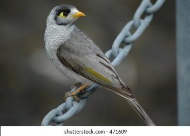 Miner bird on chain