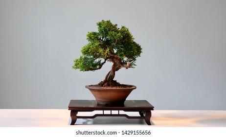 Mini bonsai art of living