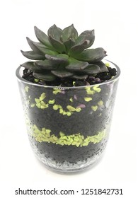 Mini cactus pot for interior mini garden