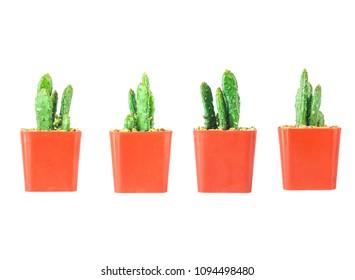 Mini Cactus pot isolated on white background