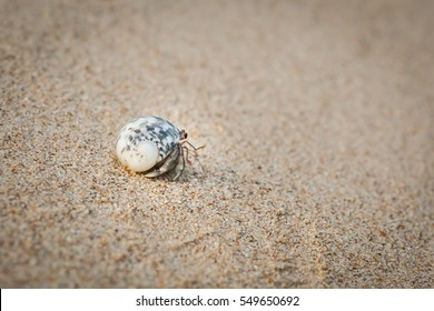 Mini crab, Hermit crab on sand beach in Andaman sea.(Selective Focus)