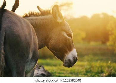 Miniature Donkeys Images, Stock Photos & Vectors | Shutterstock