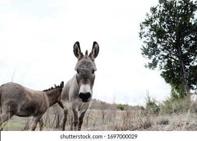 Mini donkeys in rural field, copy space on sky background.